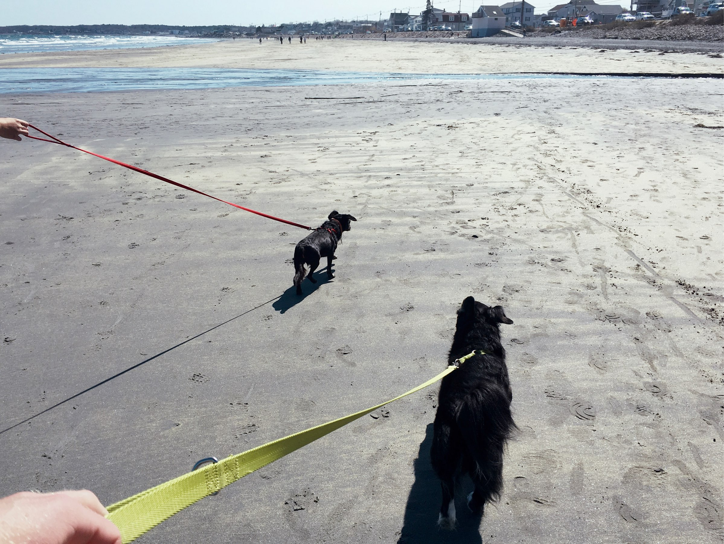 Two dogs on the beach.