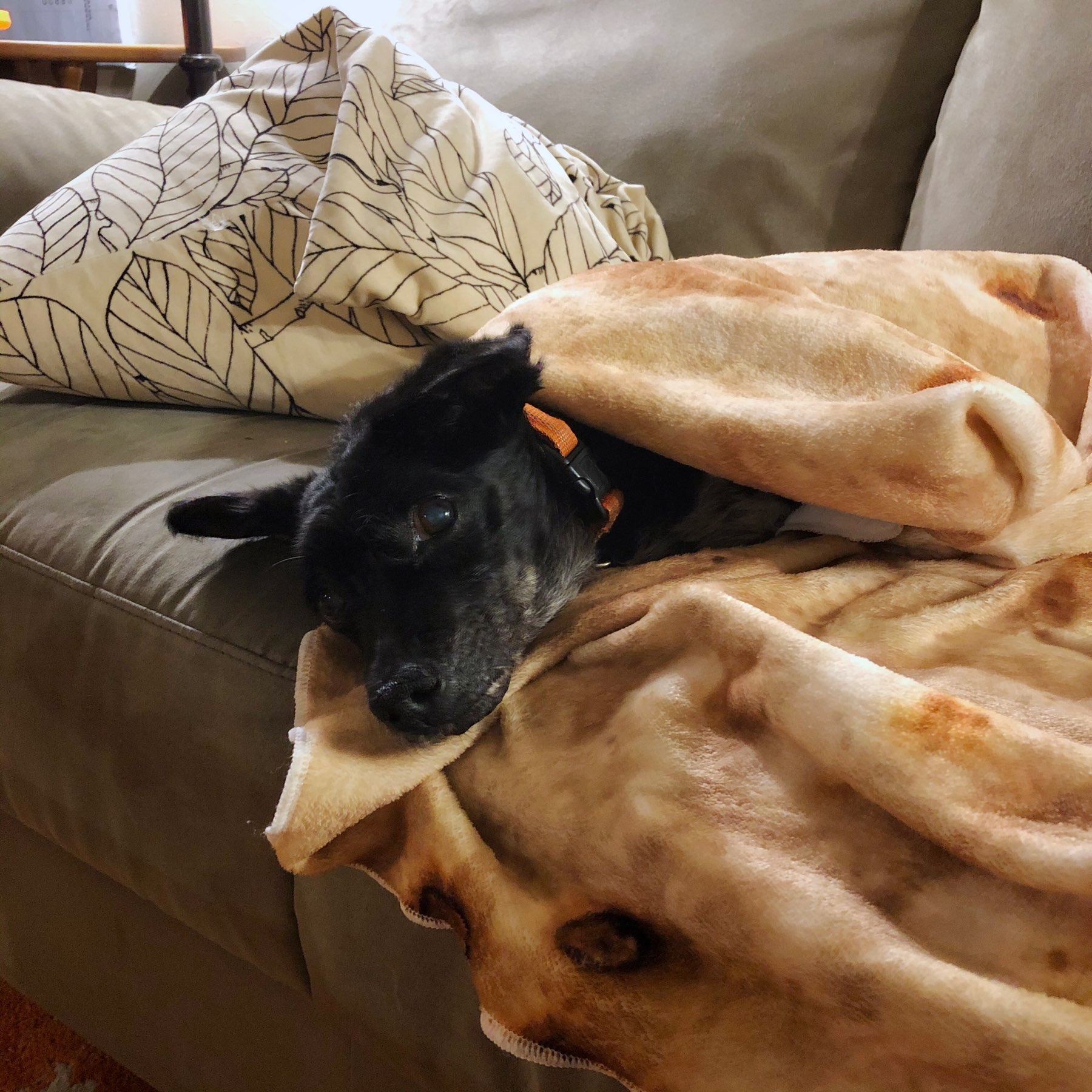 Dog in a blanket.